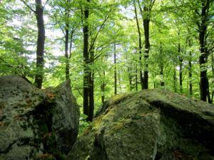 Auf dem Stückstein bei Joggingtour am 20.05.2013 im Oberpfälzer Wald bei Eslarn